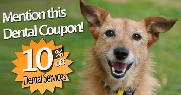Canton Vet Pet Dental Services 10off