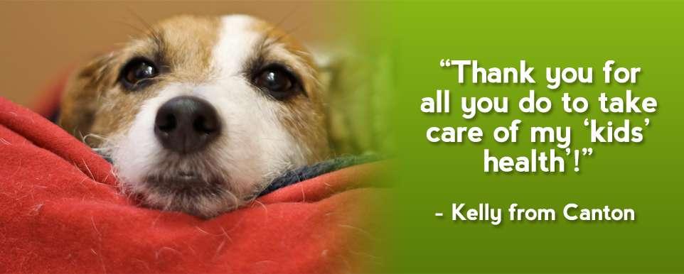 Pets veterinary health care