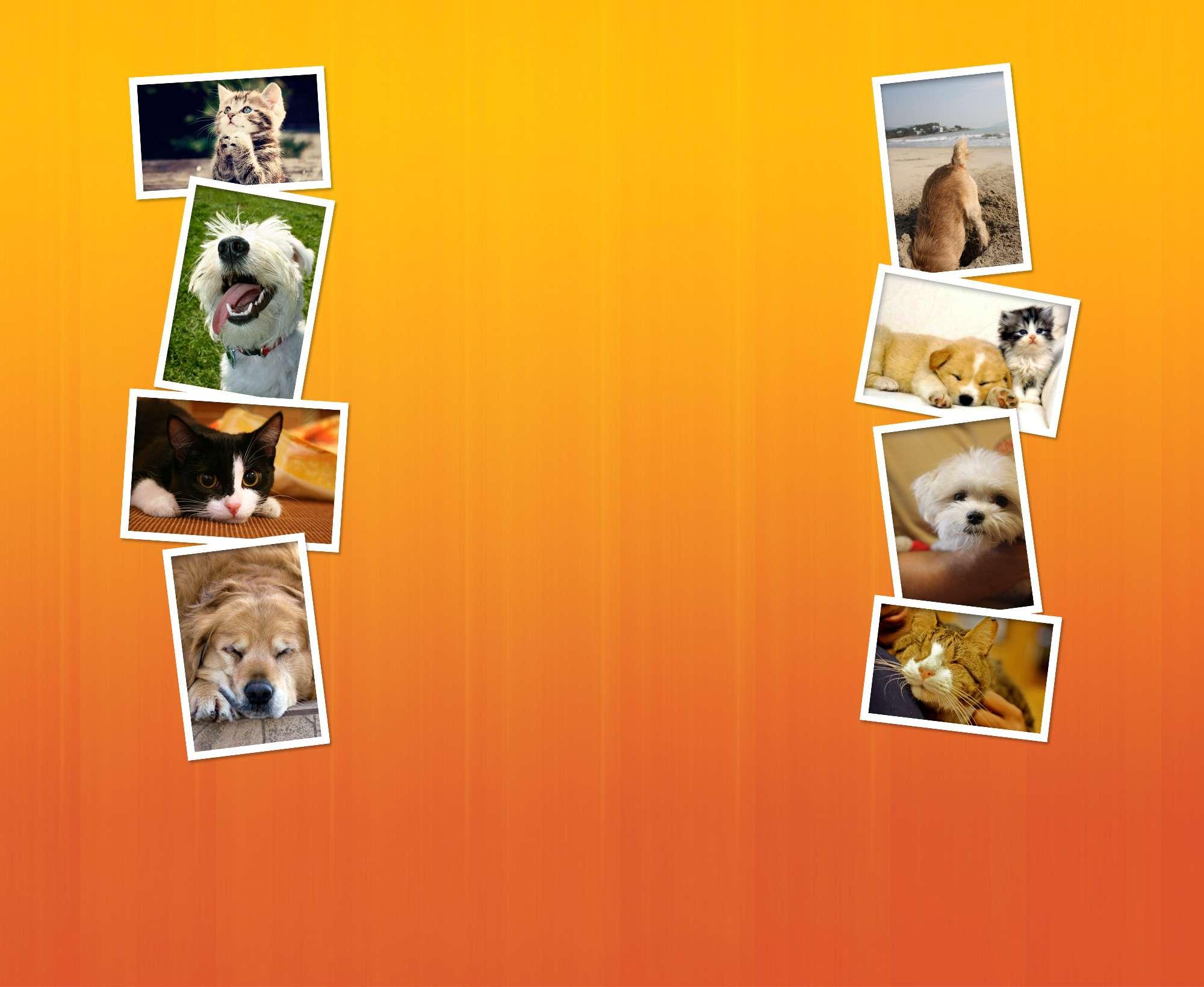 veterinary background