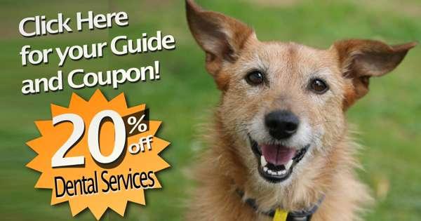 Vet Pet Dental Coupon