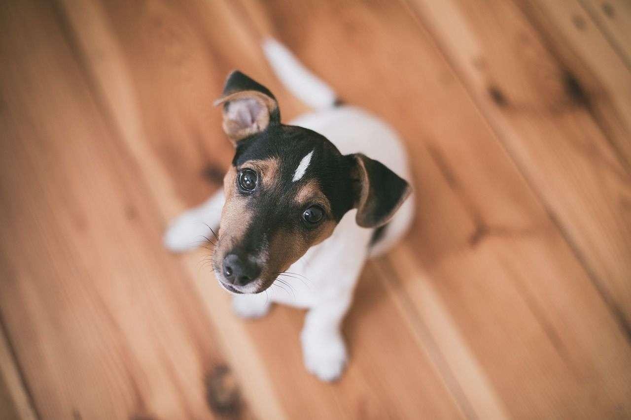 Care Credit for Animals Vet Bills