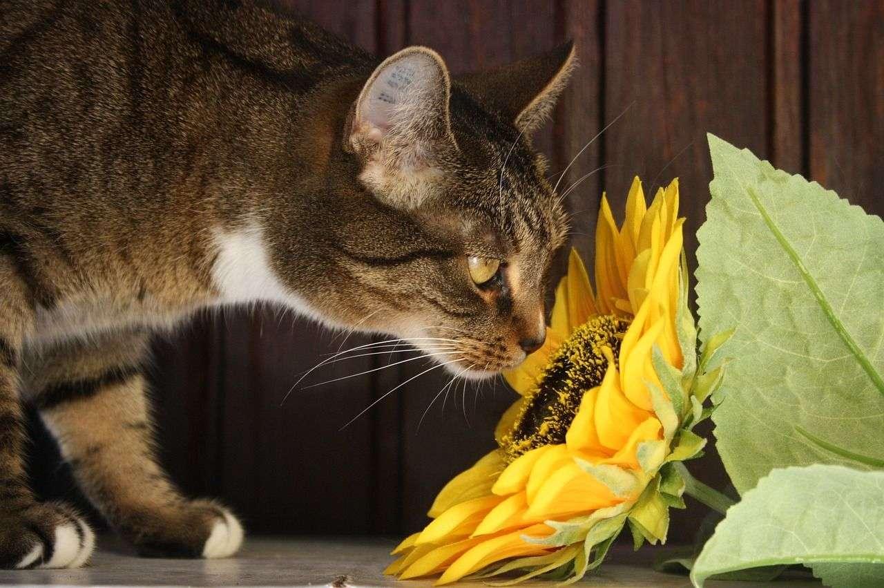 Food Skin Pollen Allergies in Pets