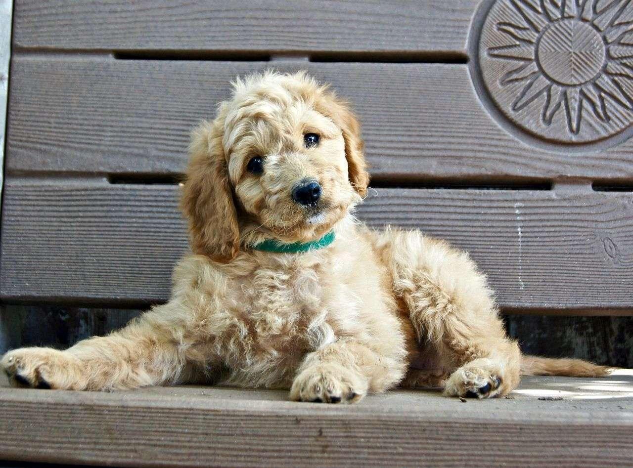 puppy kitten cat dog insurance for pets