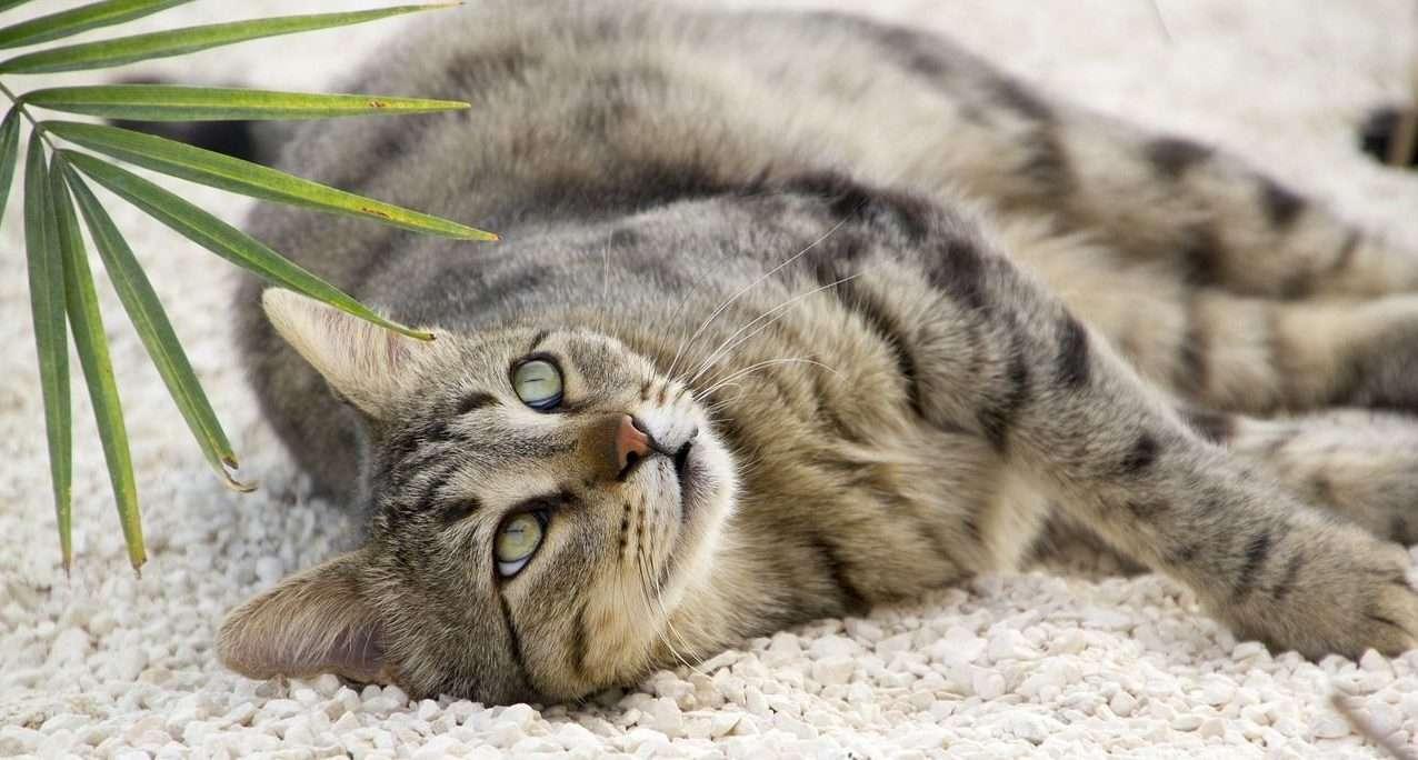 sick feline symptoms