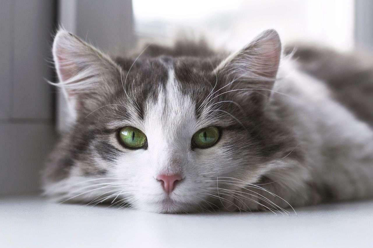 kitten veterinary care