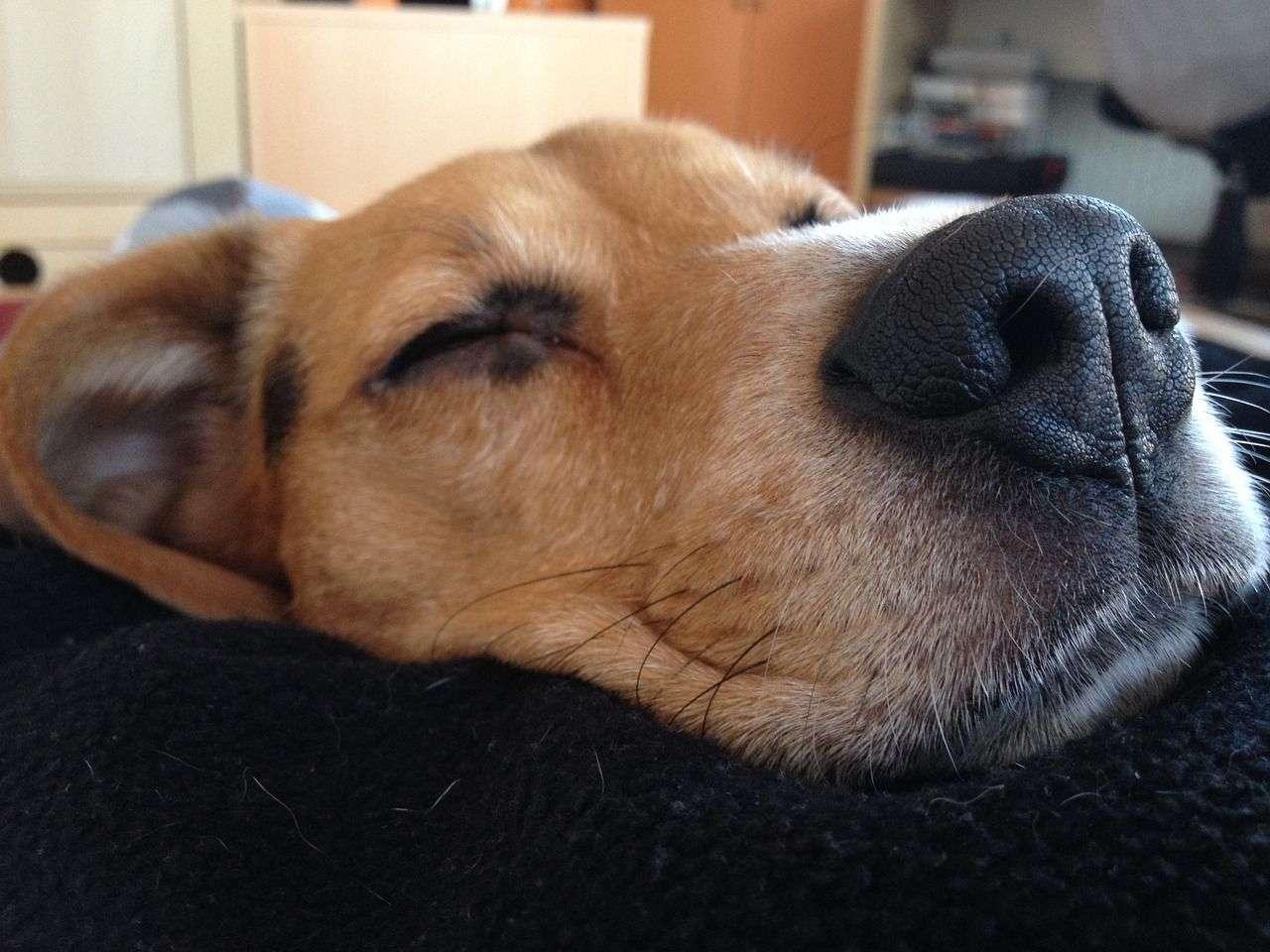 vet help for sick pets