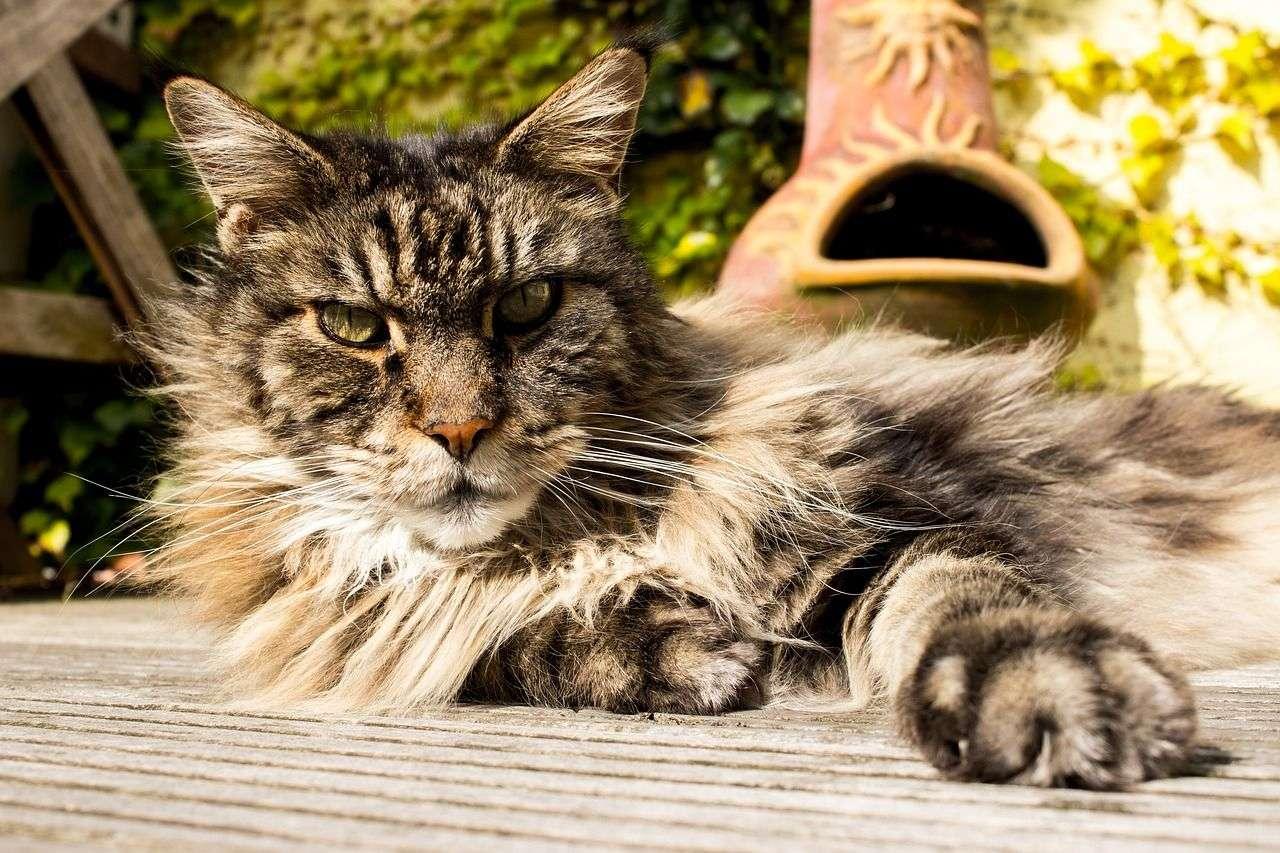 Caring for Elder Pets in Canton Ga